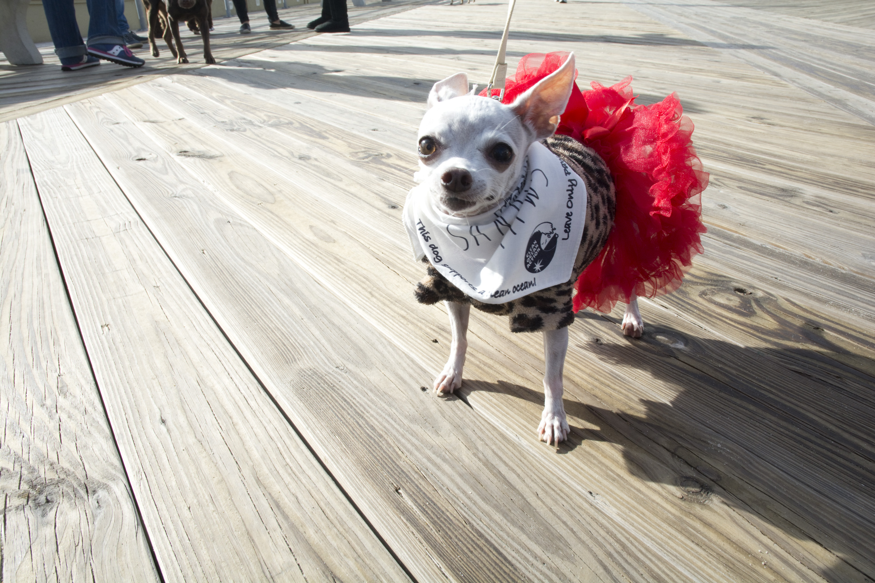 Look at my Tutu!