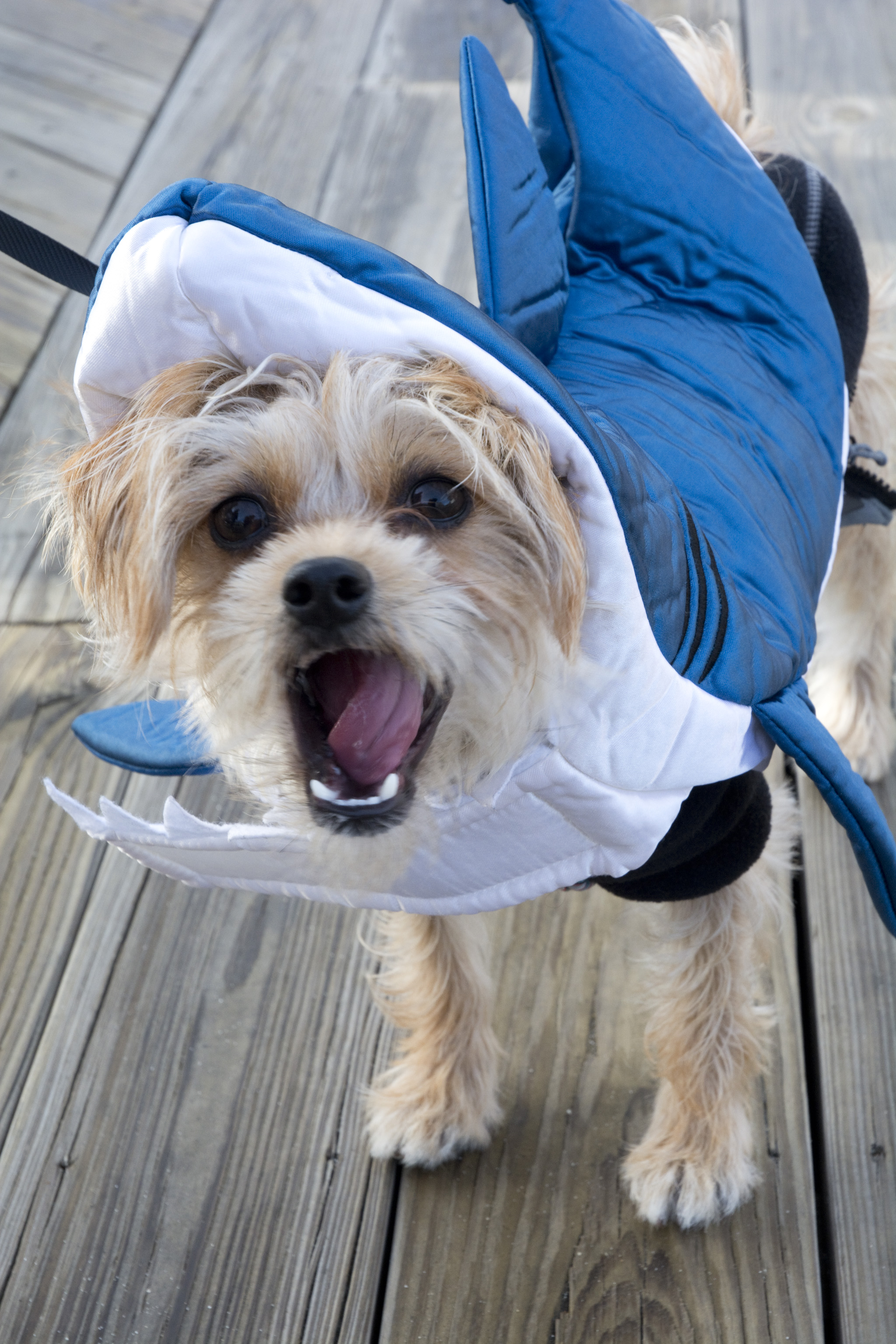 Loui Shark